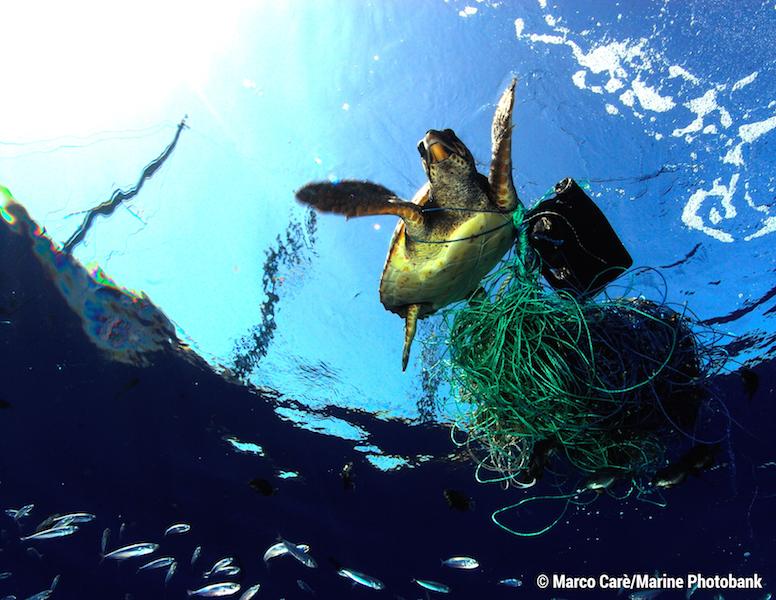 Imagem da notícia: Breitling apoia Ocean Conservancy