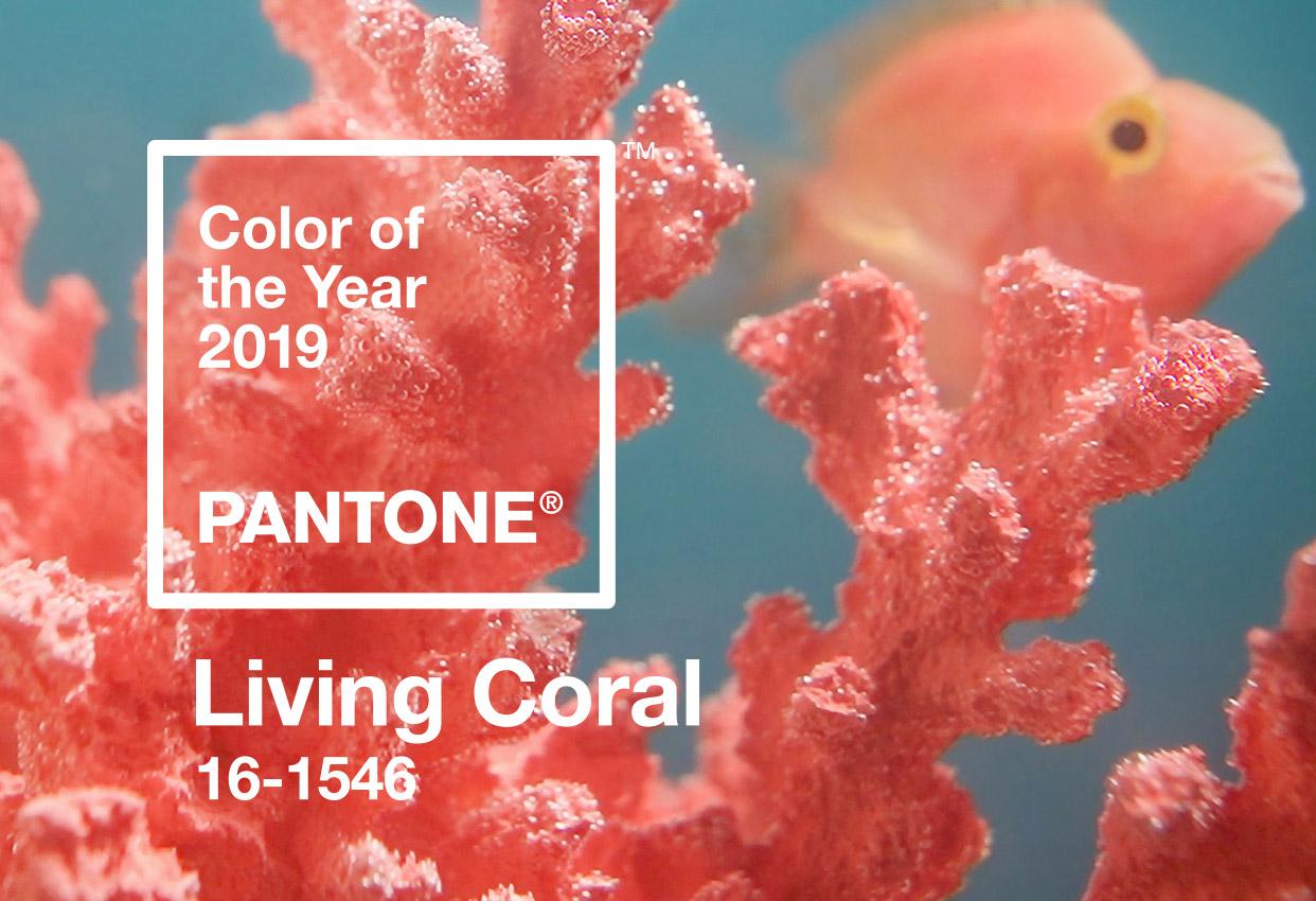 Imagem da notícia: Coral Vivo é a cor de 2019
